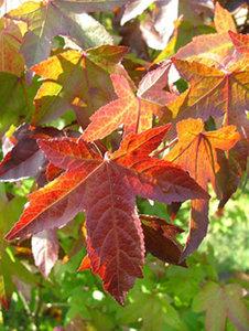 Bomen online kopen voor tuin of plantsoen